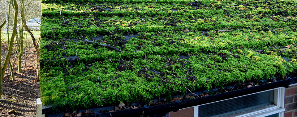 Are Green Roofs Set to Go Mainstream in the UK?