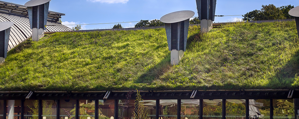The Practicalities of Getting a Green Roof